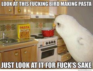 look-at-this-bird-making-pasta