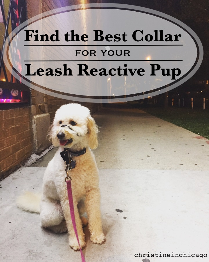 How I Found the Right Collar for my Leash Reactive Pup